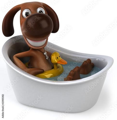 Foto Chien dans son bain