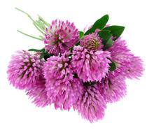 Bouquet Of Clover Flowers Tref...