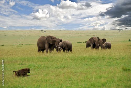 Aluminium Prints Bison elefanti nel parco Masai Mara