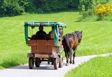 Pferdekutsche In Der Natur - Horse Coach