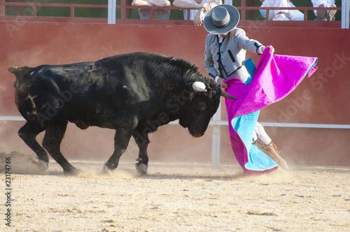 Deurstickers Stierenvechten Fighting bull picture from Spain. Black bull