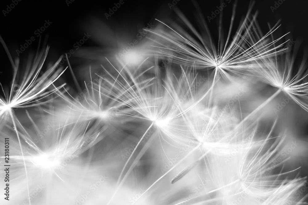 Fototapeta Dmuchawce, latawce, wiatr - obraz na płótnie