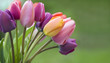 Leinwandbild Motiv Colorful tulips in the garden