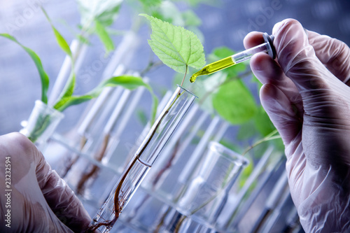Scientist examine plants #23232594