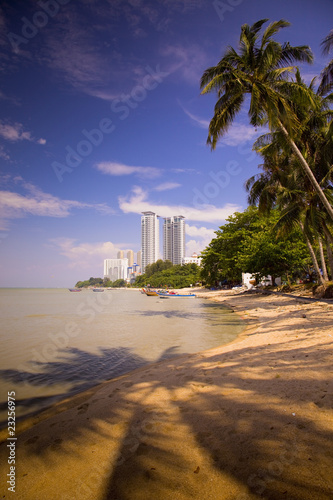 Photo Stands Palm tree insel penang, malaysia