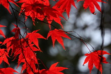 Leaves Of Different Varieties And Colors During The Fall Season
