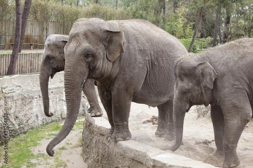 Poster Parrot éléphants