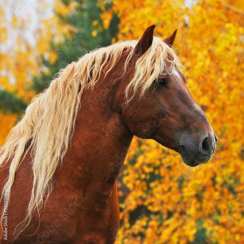Photo  chesnut horse in autumn