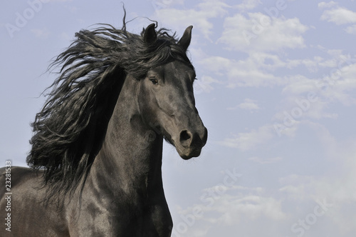 Fototapeta black horse run gallop on the clouds background obraz