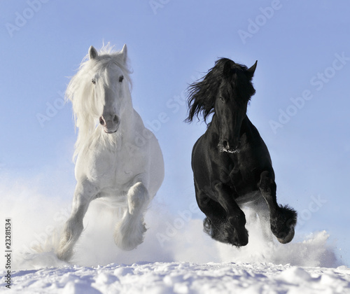 Fototapeta white and black horse obraz