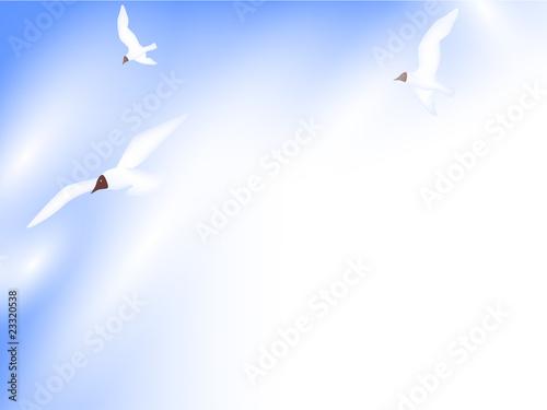 Fototapeta seaguls in the sky obraz na płótnie