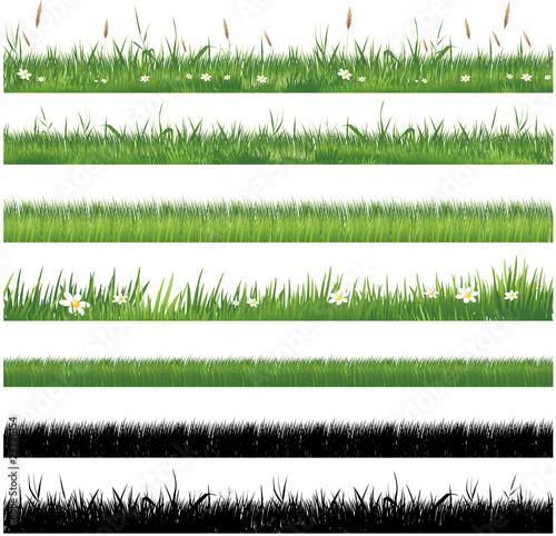 Obraz Green grass collection - fototapety do salonu