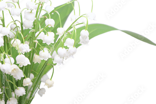 In de dag Lelietje van dalen Lily of the valley
