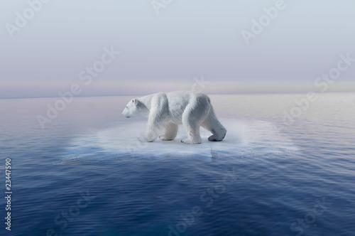 cambio climatico oso polar en pequeño iceberg