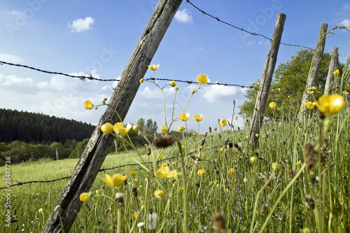Fotografia  Naturpark Hohes Venn-Eifel