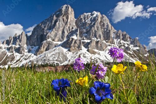 Fotografie, Obraz  Bergblumen in den Dolomiten