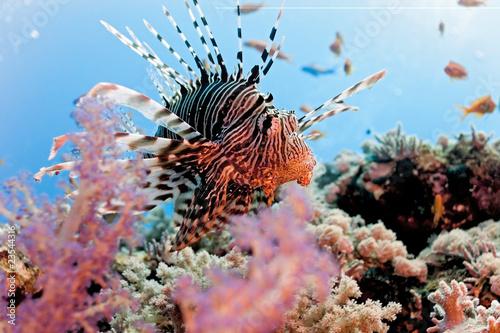 Keuken foto achterwand Onder water Lionfish on the coral reef