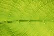 canvas print picture - grünes Leben - grünes Blatt