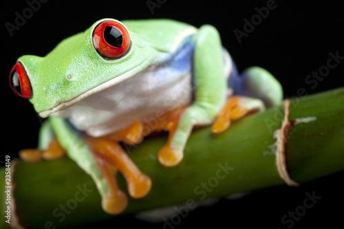 Tuinposter Kikker green frog closeup