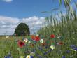 Blumenwiese, Baum, Kornfeld