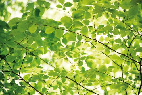 Foto-Lamellenvorhang - Blätter (von Mademoiselle Bézier)