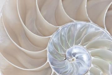 Obraz na Szkle Do sypialni Nautilus Shell