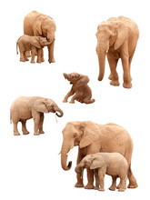 Set Of Young And Older Elephants Isolated On A White Background