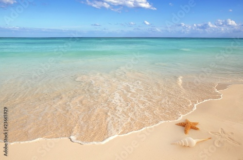 Spoed Foto op Canvas Caraïben sea shells starfish tropical sand turquoise caribbean