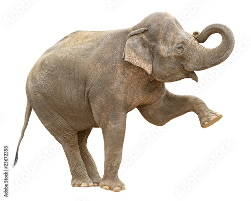 Photo Indian elephant female greeting cutout