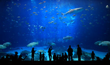 Large Aquarium - People Silhou...