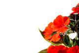 Fototapeta Kwiaty - Letnie kwiaty