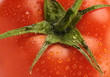 Macro of freshness tomato with water drops