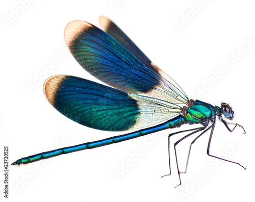 Carta da parati Dragonfly isolated on white