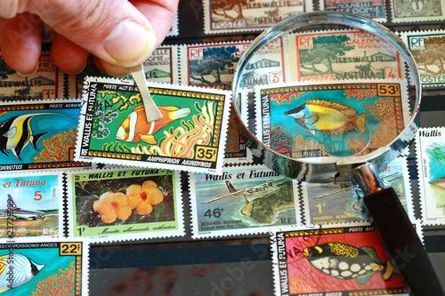 Fotografiet Il saisit le timbre