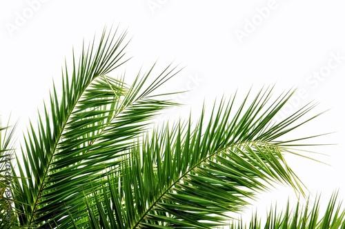 Photo sur Aluminium Palmier Palmenblätter im Wind
