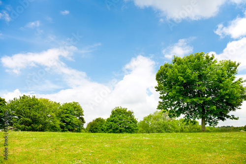 Nature background, green grass,trees and cloudy sky