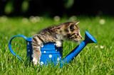 Mały kotek na konewce