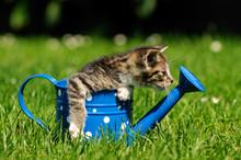 Kleine Katze In Der Kanne