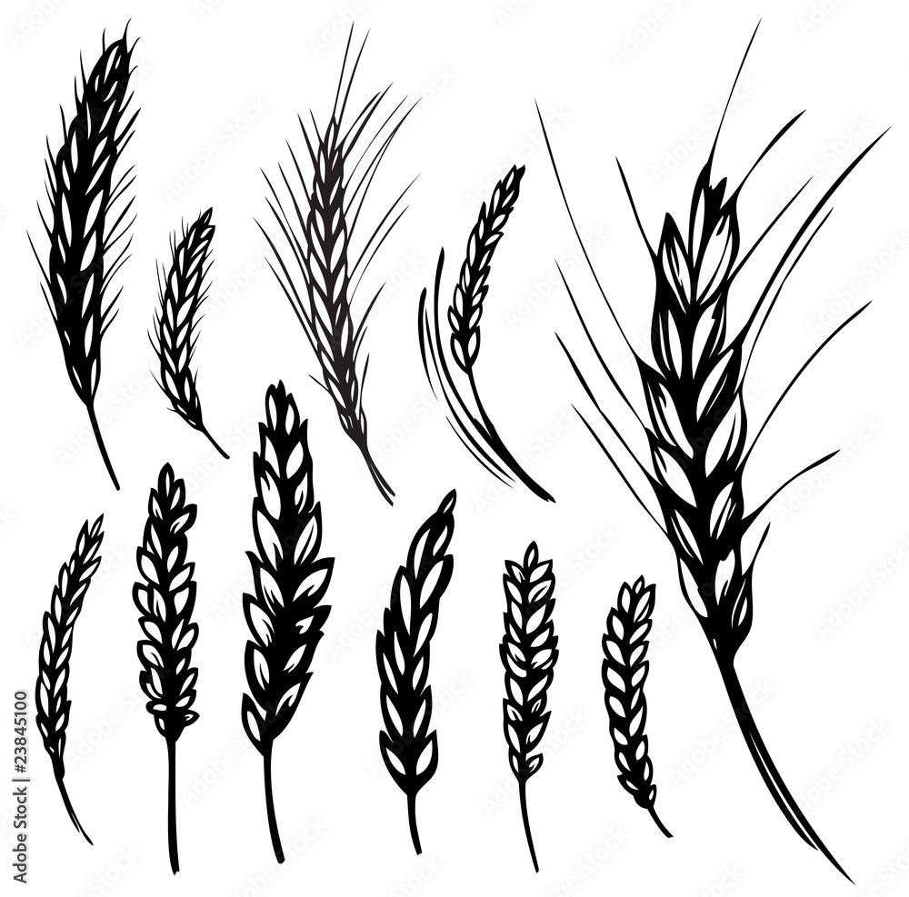 7 Getreide Bilder Zum Ausmalen - Besten Bilder von ausmalbilder