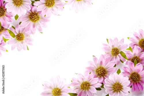 Foto op Canvas Bloemen 菊