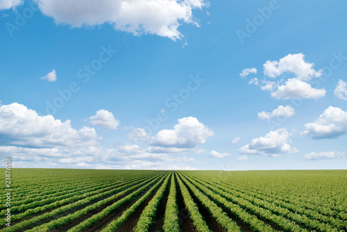 Garden Poster Culture cultivated field
