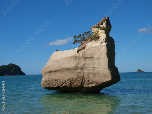 Foto op Canvas Cathedral Cove Cathedral Cove, Coromandel Peninsula , Neuseeland
