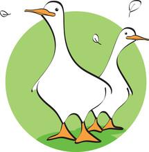 Oca Duck