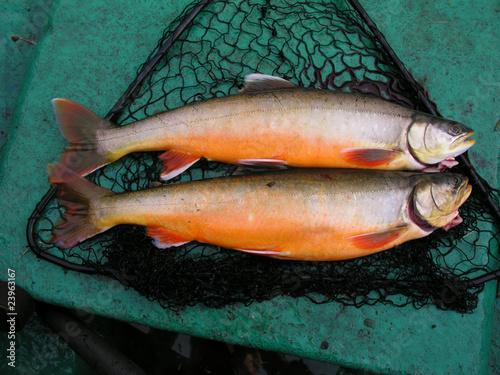 Valokuva  Fresh fish