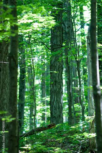 Fotobehang Bossen Nature
