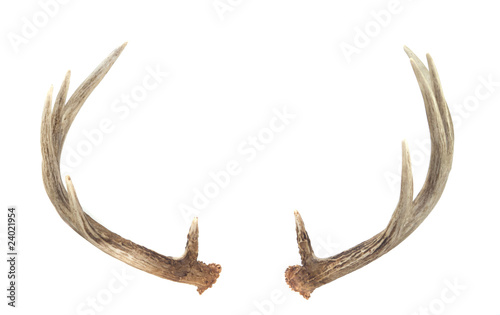 Rear View of Whitetail Deer Antlers Canvas Print