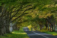 Beech Tree Avenue At Kingston ...