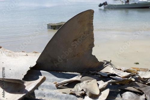 Photo aileron de requin