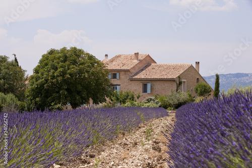Garden Poster Lavender Champ de lavandes devant un mas provençal