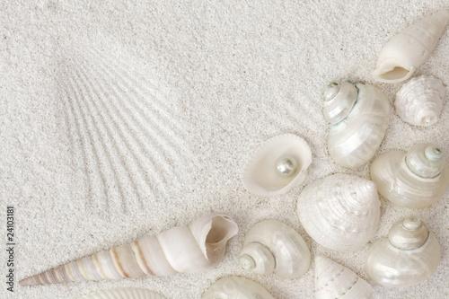 Obraz na płótnie White seashells on white sand